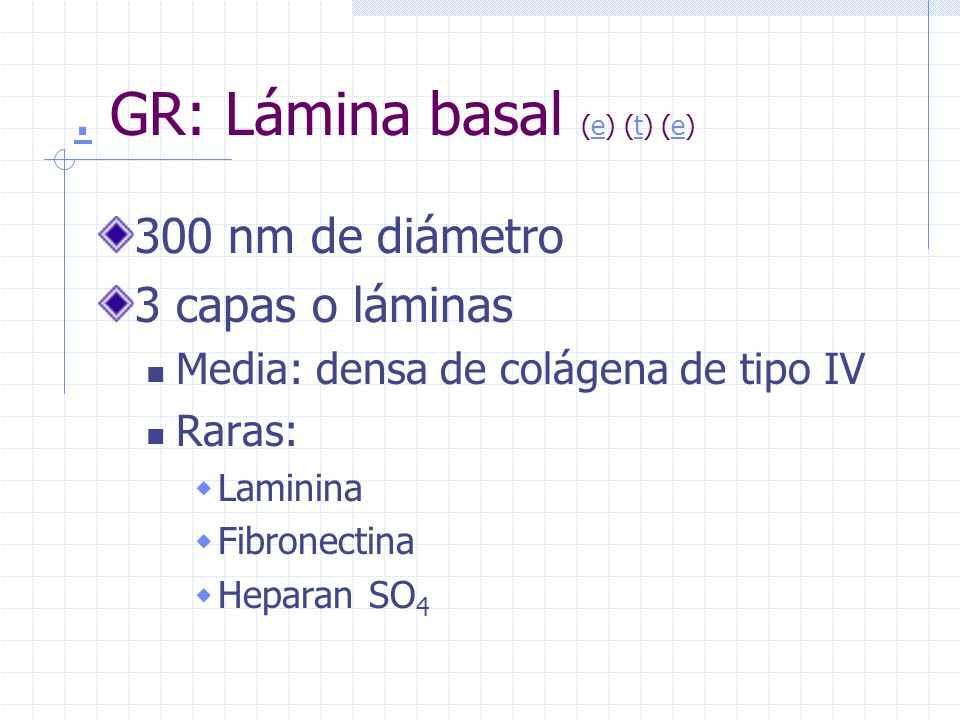 . GR: Lámina basal (e) (t) (e)
