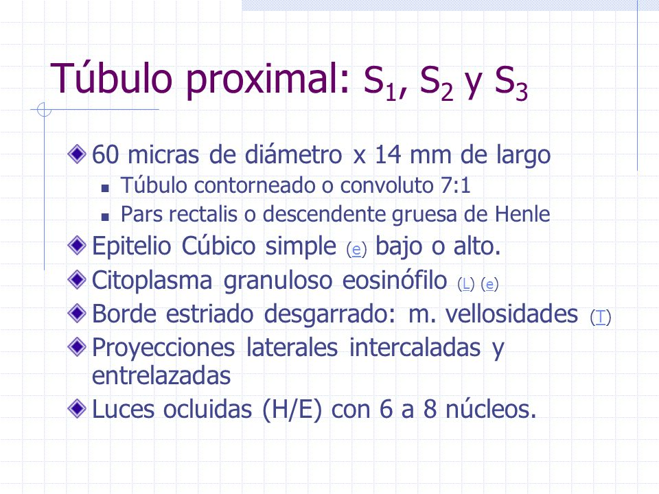 Túbulo proximal: S1, S2 y S3 60 micras de diámetro x 14 mm de largo