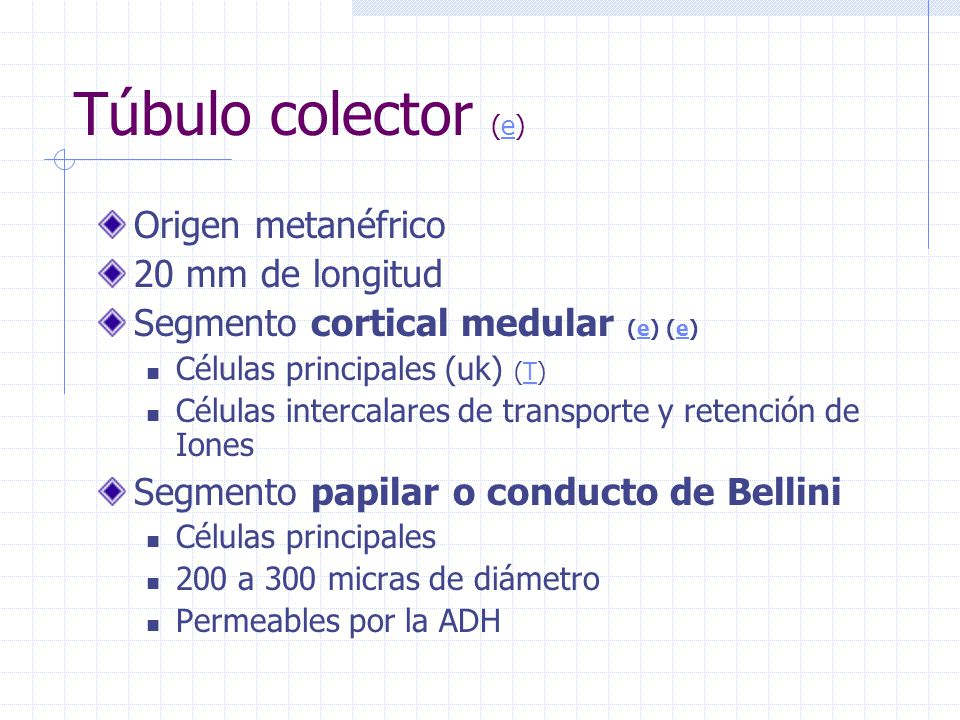 Túbulo colector (e) Origen metanéfrico 20 mm de longitud