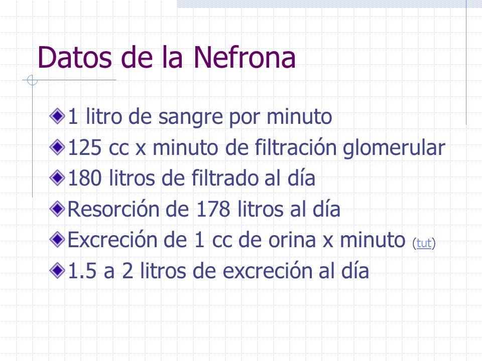 Datos de la Nefrona 1 litro de sangre por minuto