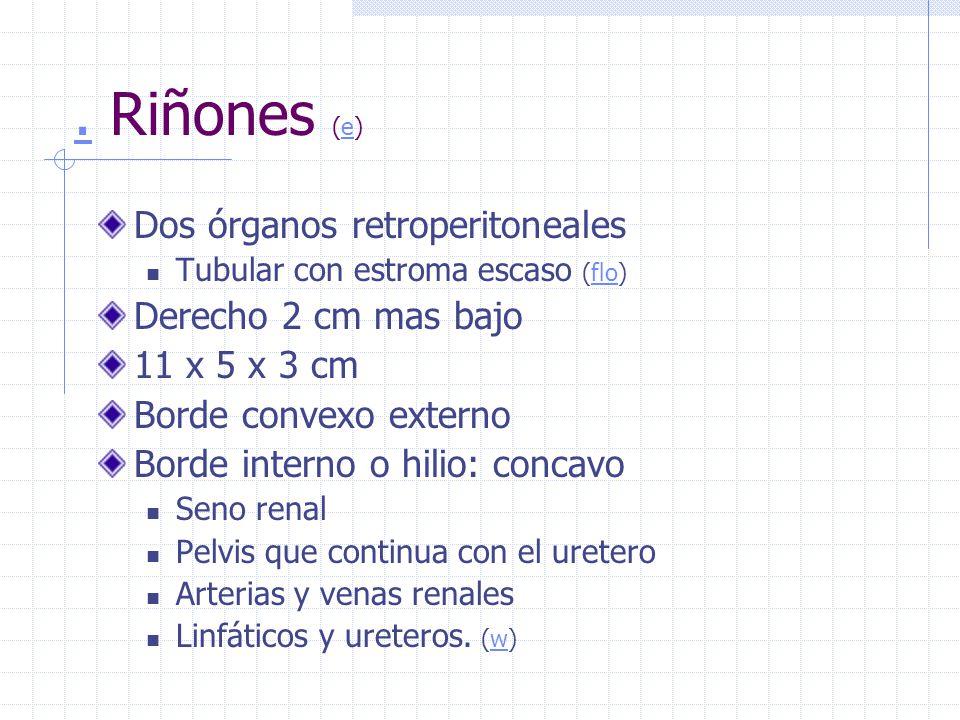 . Riñones (e) Dos órganos retroperitoneales Derecho 2 cm mas bajo
