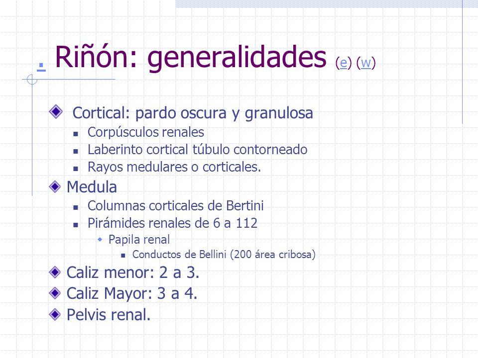. Riñón: generalidades (e) (w)