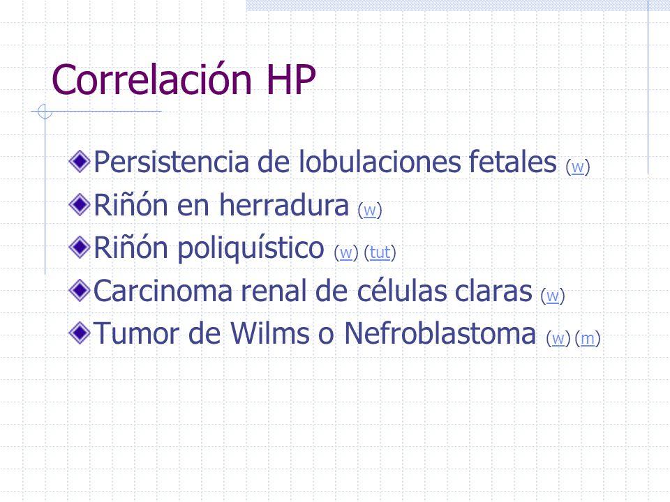 Correlación HP Persistencia de lobulaciones fetales (w)