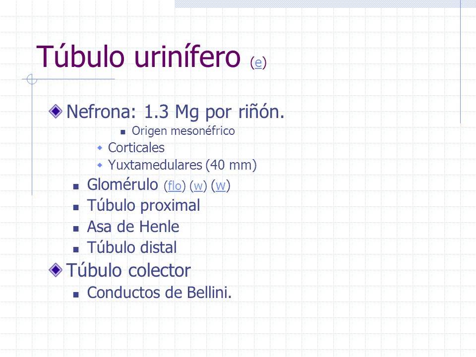 Túbulo urinífero (e) Nefrona: 1.3 Mg por riñón. Túbulo colector