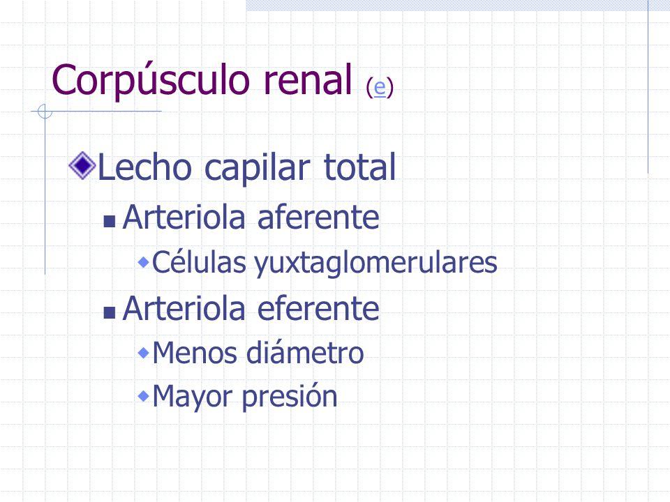 Corpúsculo renal (e) Lecho capilar total Arteriola aferente