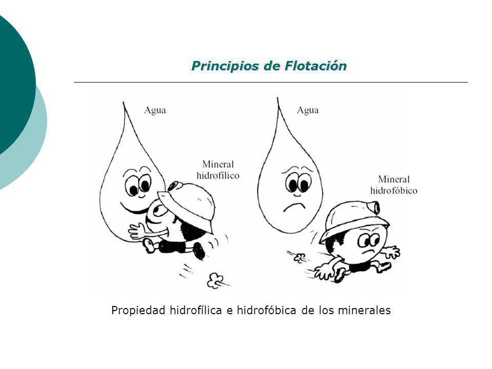 Principios de Flotación