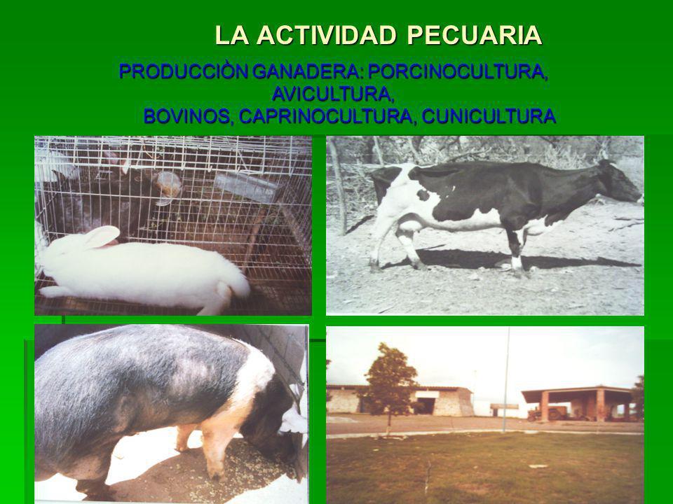 LA ACTIVIDAD PECUARIA PRODUCCIÒN GANADERA: PORCINOCULTURA, AVICULTURA,