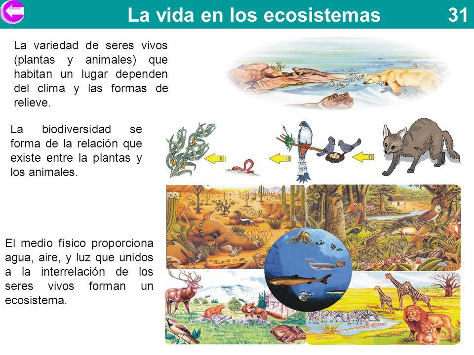 La vida en los ecosistemas 31