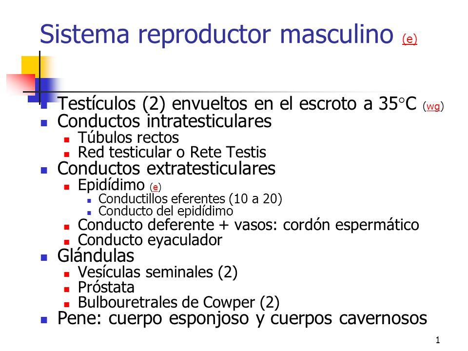 Sistema reproductor masculino (e)