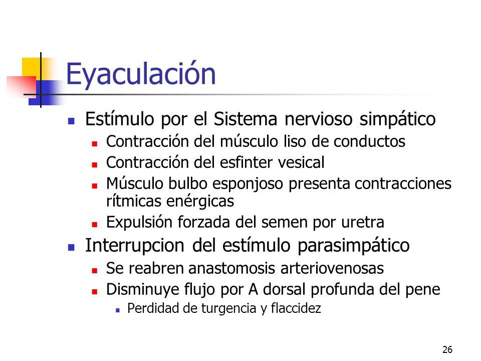 Eyaculación Estímulo por el Sistema nervioso simpático