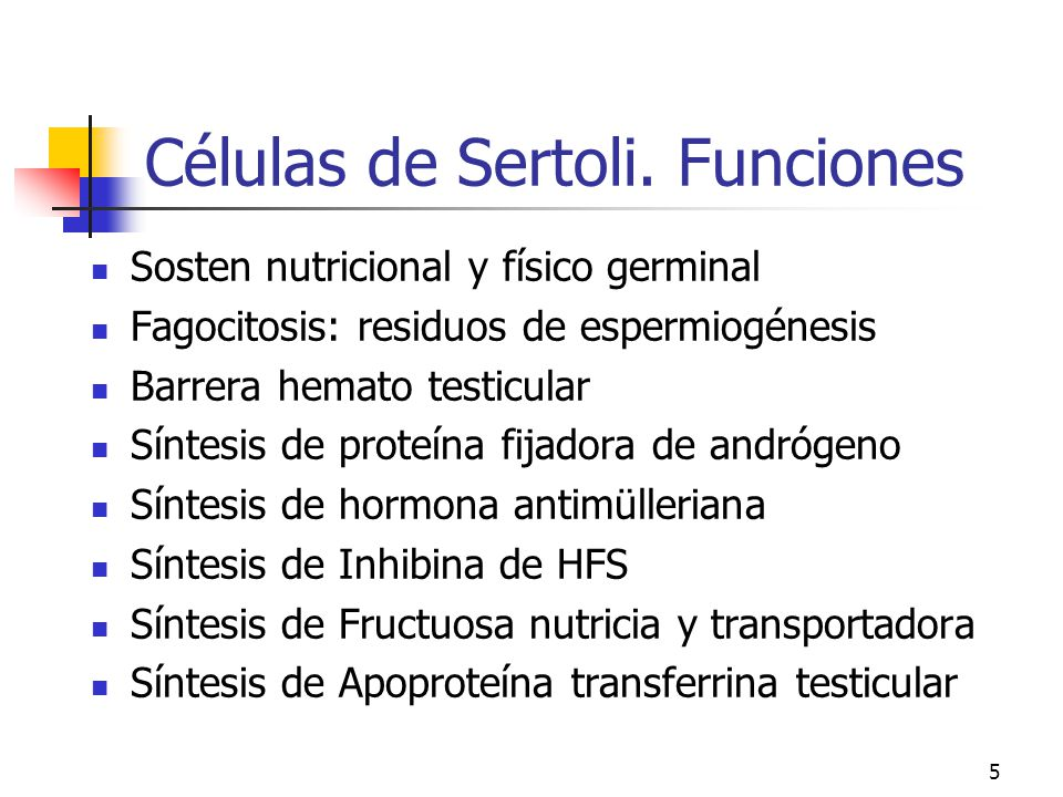 Células de Sertoli. Funciones