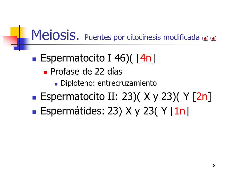 Meiosis. Puentes por citocinesis modificada (e) (e)