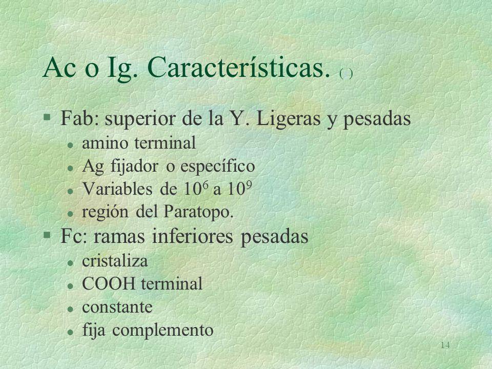 Ac o Ig. Características. (e)