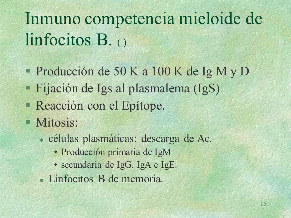 Inmuno competencia mieloide de linfocitos B. (t)