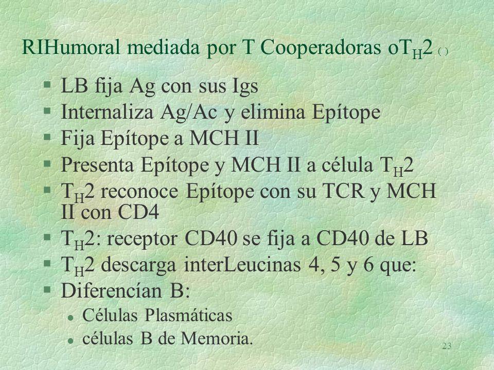 RIHumoral mediada por T Cooperadoras oTH2 (e)