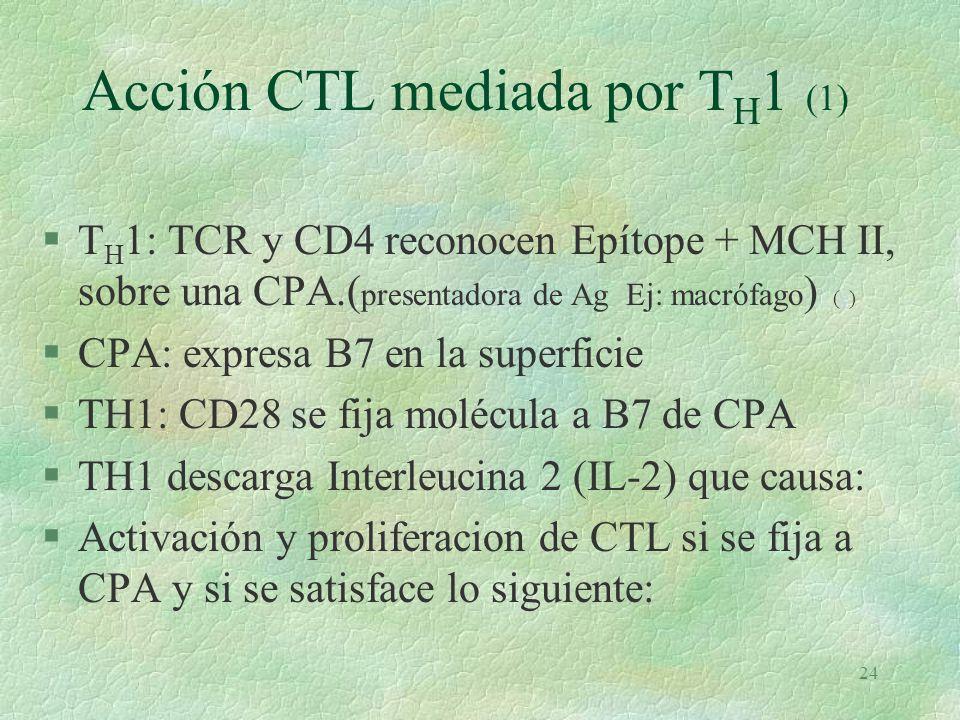 Acción CTL mediada por TH1 (1)