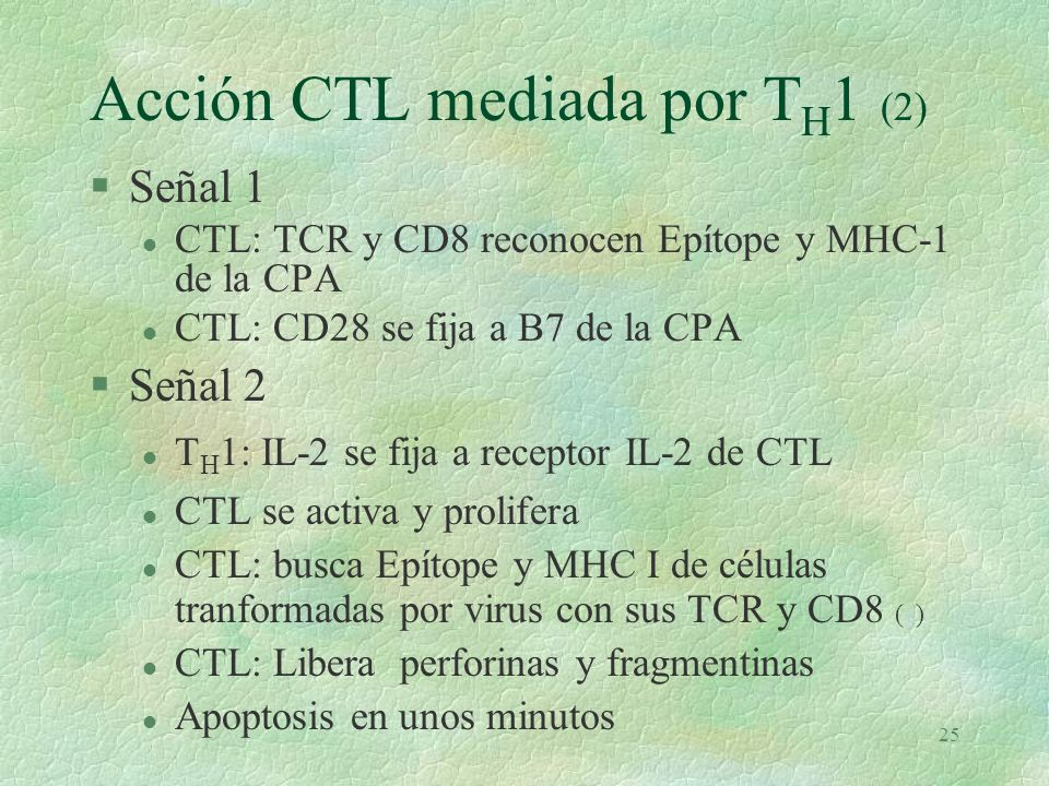 Acción CTL mediada por TH1 (2)