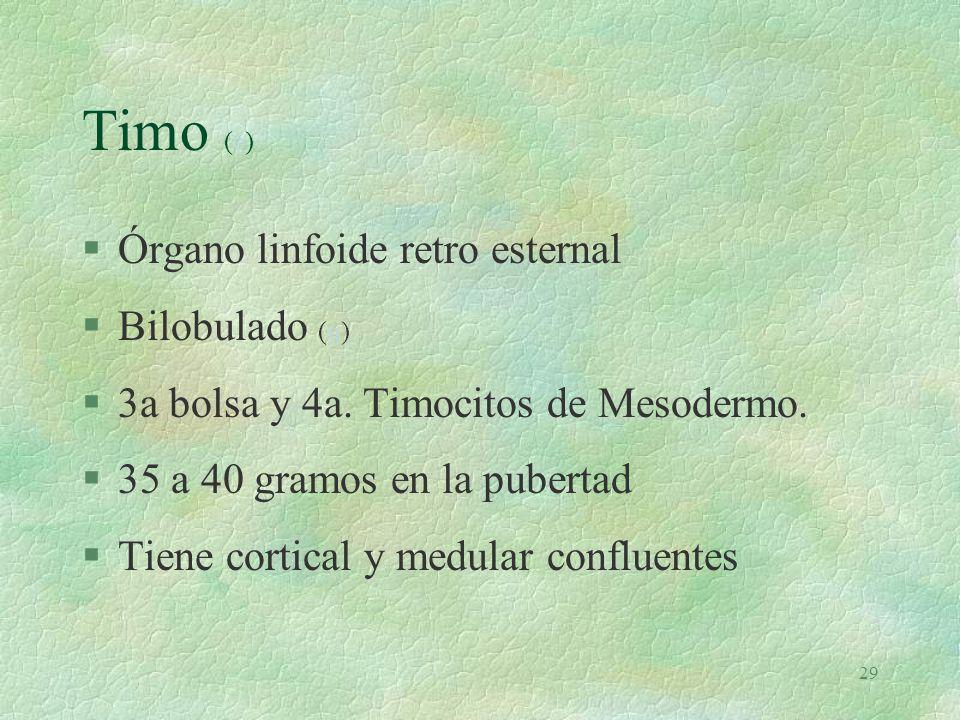 Timo (e) Órgano linfoide retro esternal Bilobulado (u)