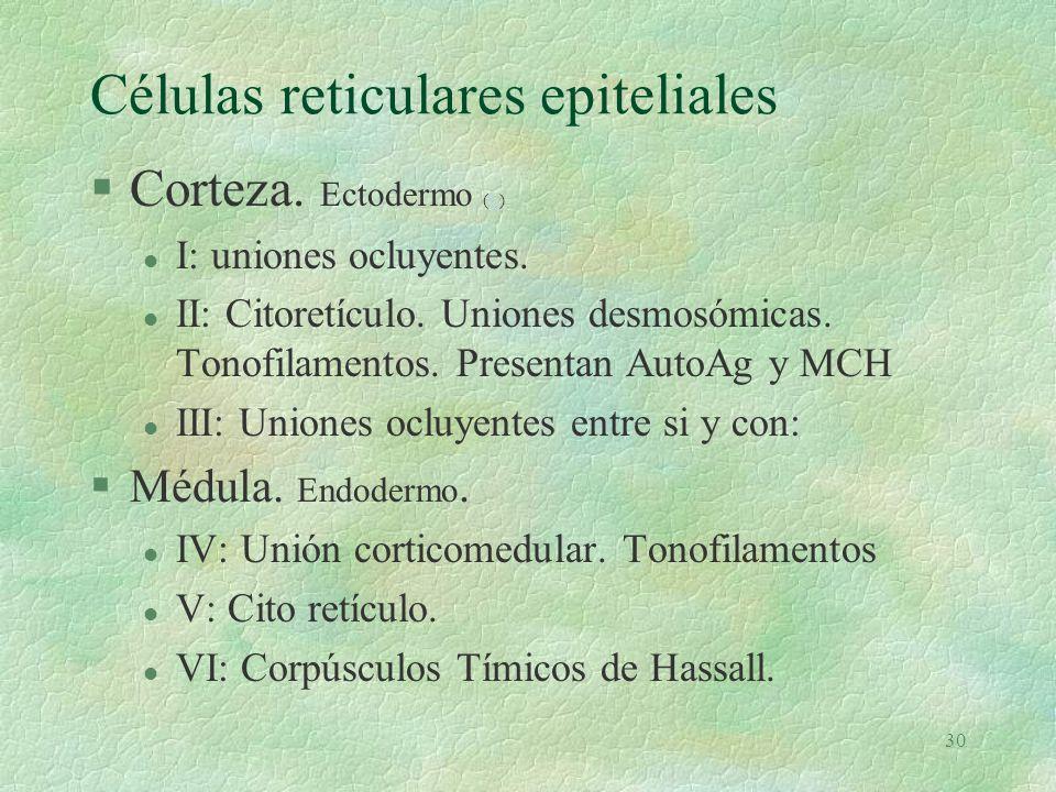 Células reticulares epiteliales