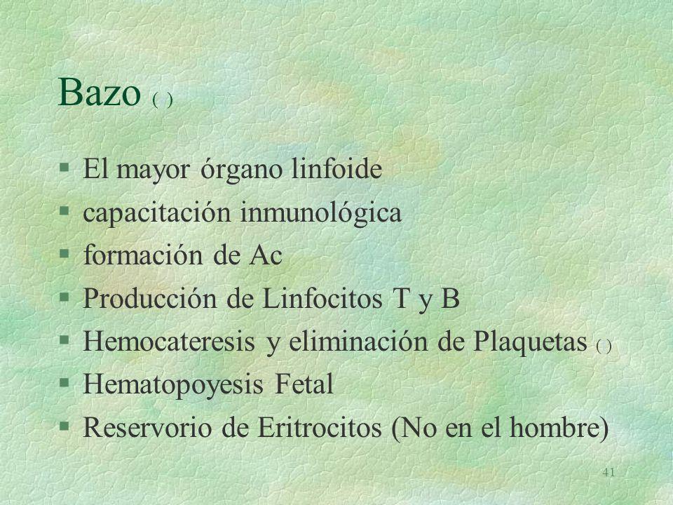 Bazo (e) El mayor órgano linfoide capacitación inmunológica