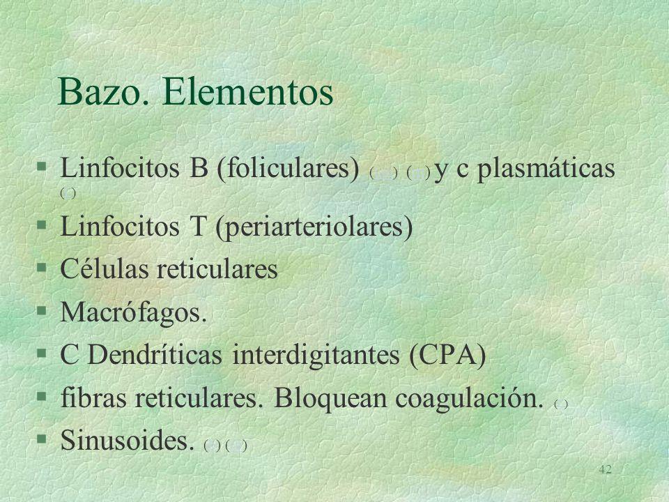 Bazo. Elementos Linfocitos B (foliculares) (um) (m) y c plasmáticas (L) Linfocitos T (periarteriolares)