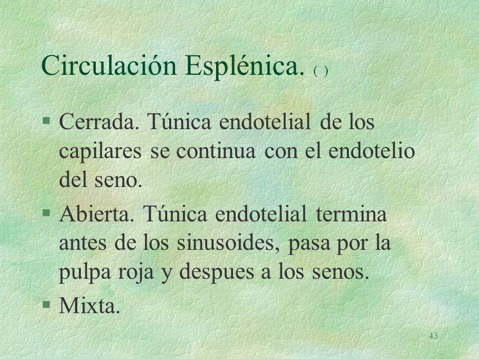 Circulación Esplénica. (e)