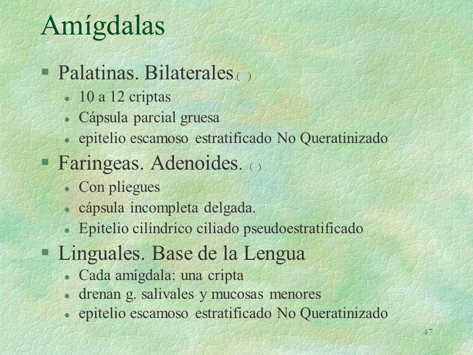 Amígdalas Palatinas. Bilaterales.(m) Faringeas. Adenoides. (L)