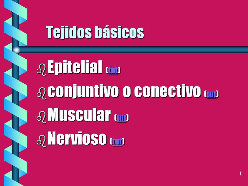 conjuntivo o conectivo (tut) Muscular (tut) Nervioso (tut)