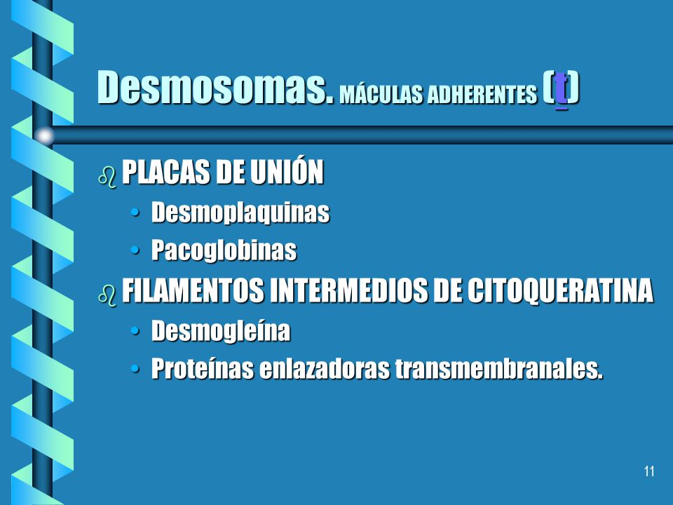 Desmosomas. MÁCULAS ADHERENTES (t)