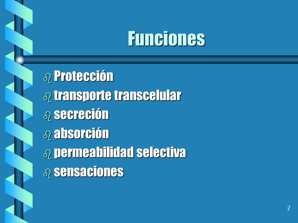 Funciones Protección transporte transcelular secreción absorción