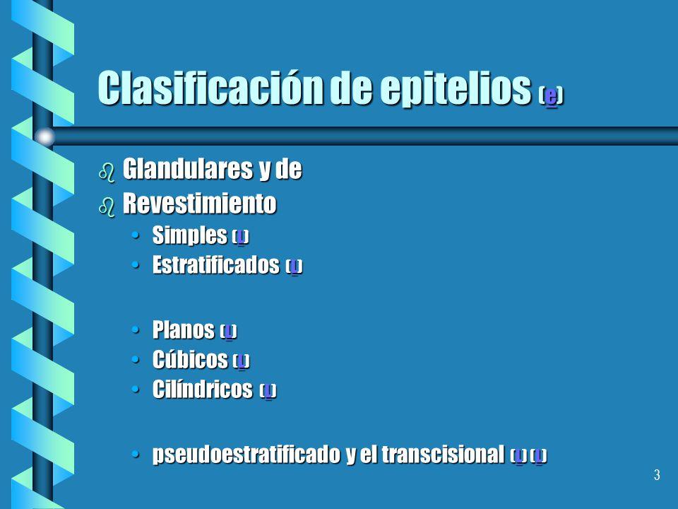 Clasificación de epitelios (e)