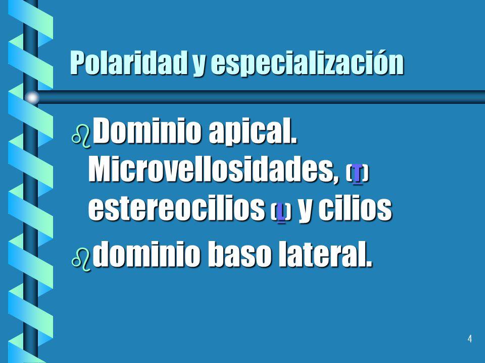 Polaridad y especialización