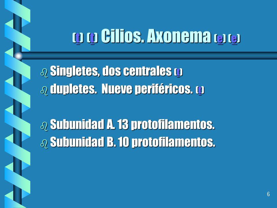 (t) (t) Cilios. Axonema (e) (e)