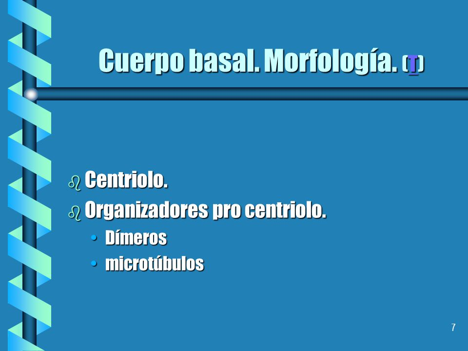 Cuerpo basal. Morfología. (T)