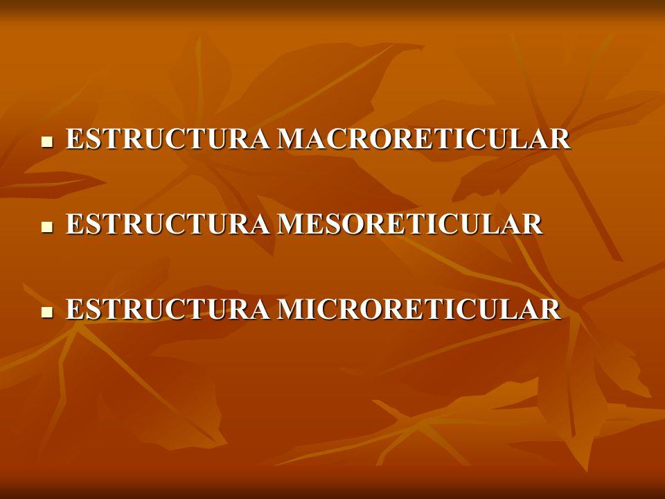 ESTRUCTURA MACRORETICULAR