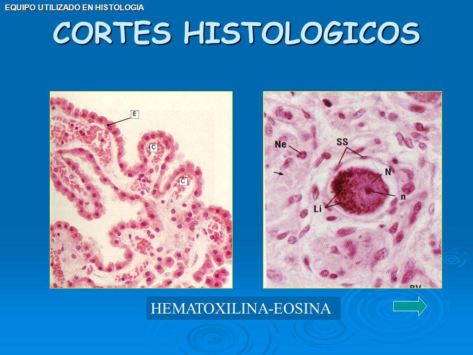 CORTES HISTOLOGICOS HEMATOXILINA-EOSINA