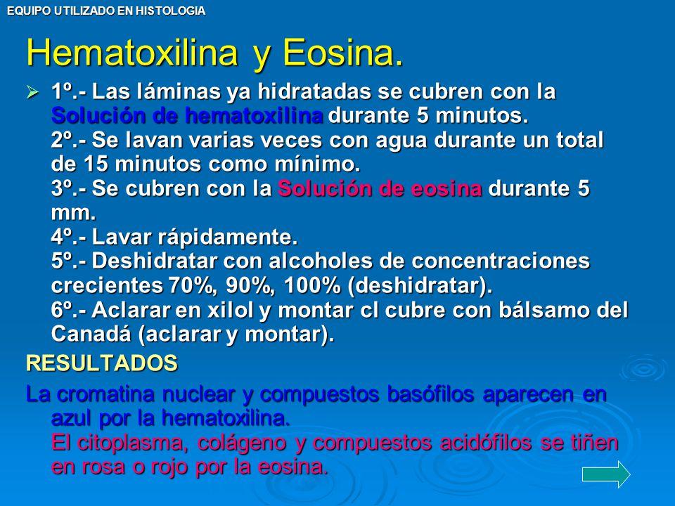 Hematoxilina y Eosina.