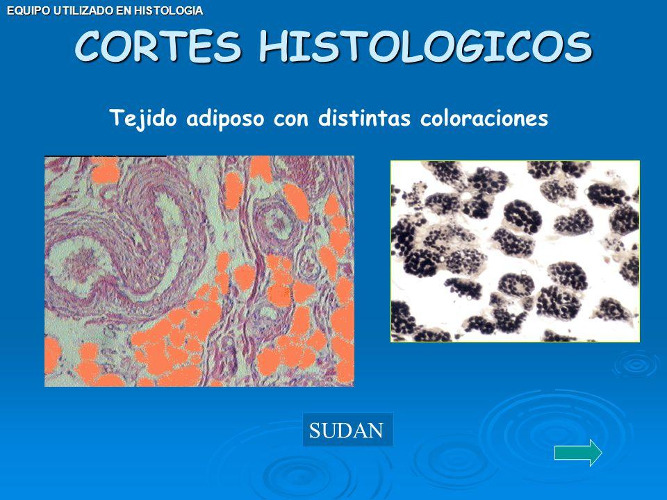 CORTES HISTOLOGICOS Tejido adiposo con distintas coloraciones SUDAN