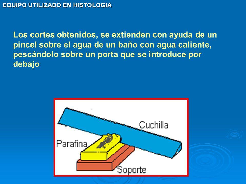 Los cortes obtenidos, se extienden con ayuda de un pincel sobre el agua de un baño con agua caliente, pescándolo sobre un porta que se introduce por debajo