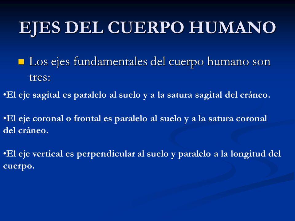 EJES DEL CUERPO HUMANO Los ejes fundamentales del cuerpo humano son tres: El eje sagital es paralelo al suelo y a la satura sagital del cráneo.