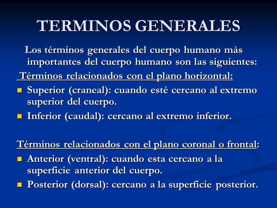 TERMINOS GENERALES Los términos generales del cuerpo humano más importantes del cuerpo humano son las siguientes: