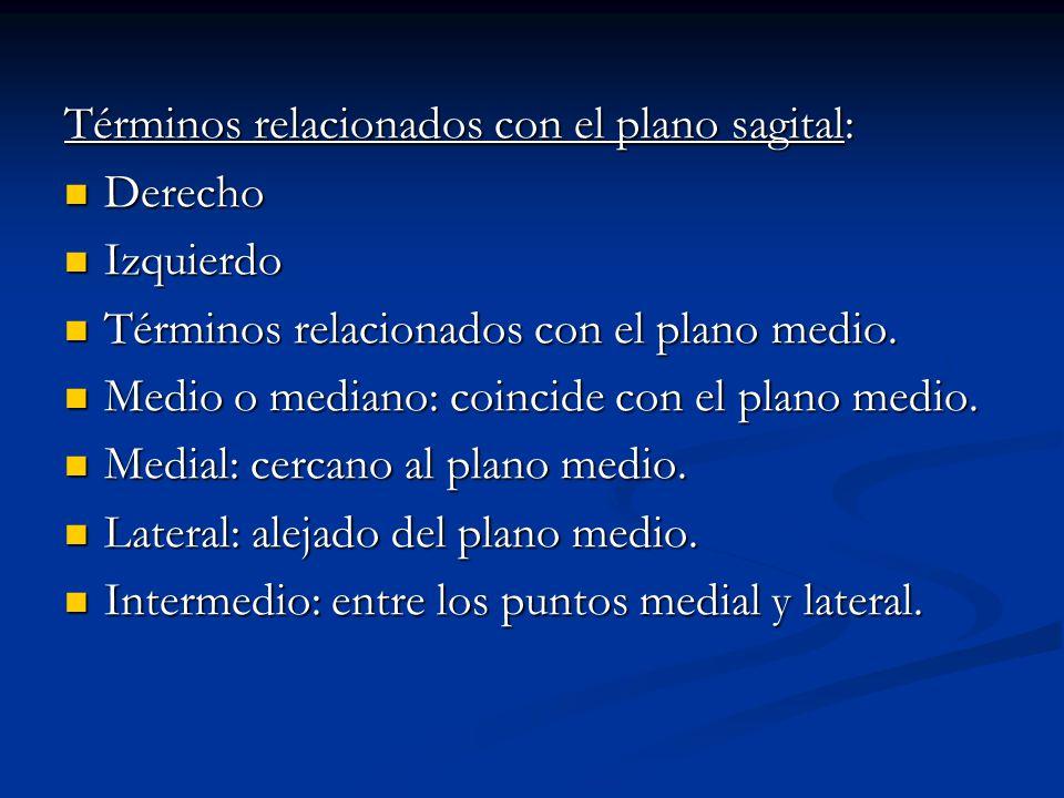 Términos relacionados con el plano sagital: