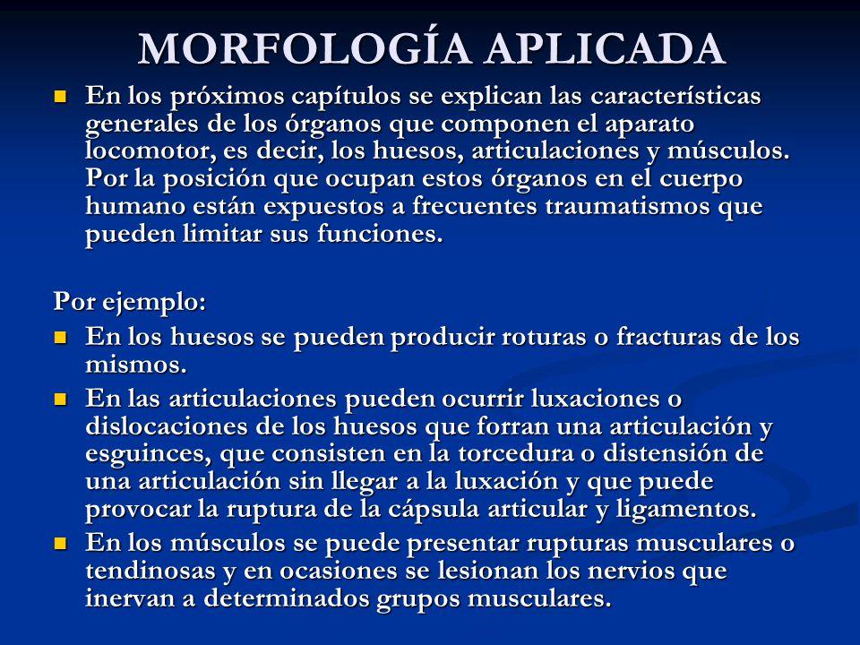 MORFOLOGÍA APLICADA