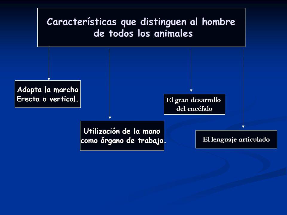 Características que distinguen al hombre El lenguaje articulado