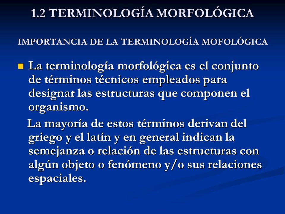 1.2 TERMINOLOGÍA MORFOLÓGICA IMPORTANCIA DE LA TERMINOLOGÍA MOFOLÓGICA