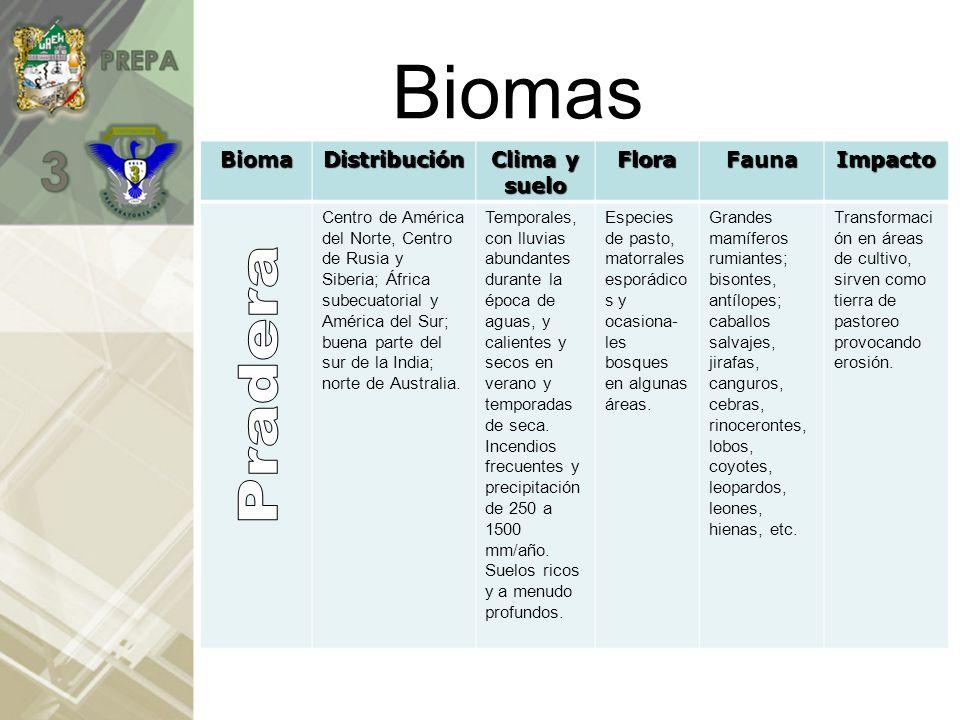 Biomas Pradera Bioma Distribución Clima y suelo Flora Fauna Impacto