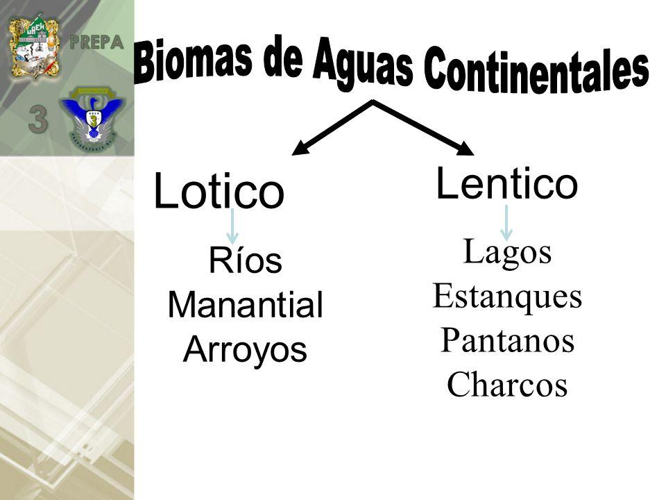 Ríos Manantial Arroyos