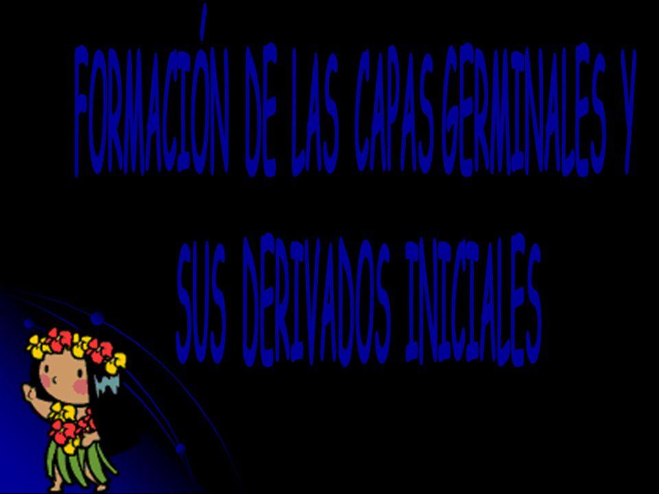 FORMACIÓN DE LAS CAPAS GERMINALES Y SUS DERIVADOS INICIALES