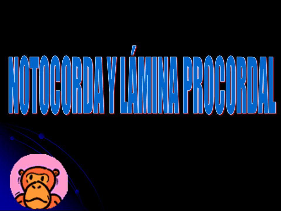 NOTOCORDA Y LÁMINA PROCORDAL
