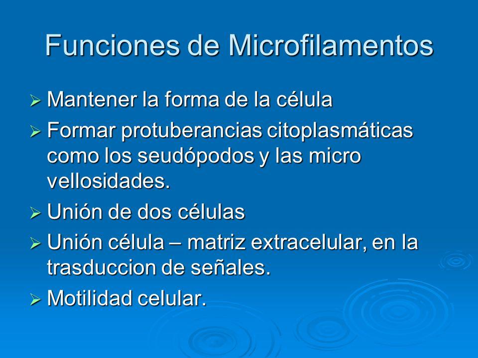 Funciones de Microfilamentos
